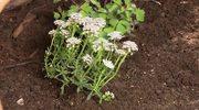 Modny ogródek dla każdego. Maja Popielarska i jej porady