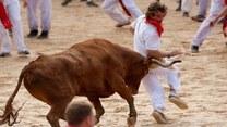Mogą zostać stratowani przez byki