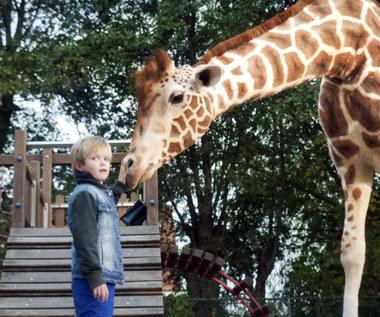 """Moja żyrafa"""