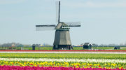 Moje przykre z Holandią doświadczenia