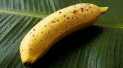 Mongee: Banan, jakiego na świecie nie było