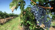 Morawy, czyli szlakiem najlepszego wina