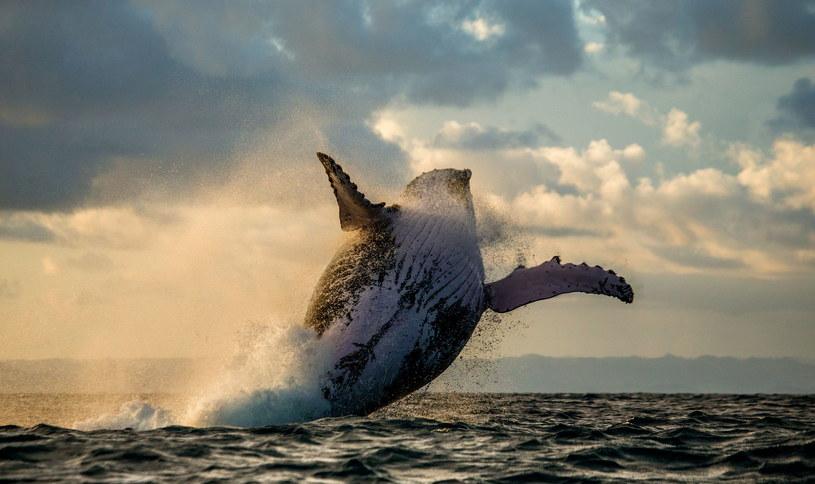 Morska megafauna jest nam szczególnie potrzebna /123RF/PICSEL