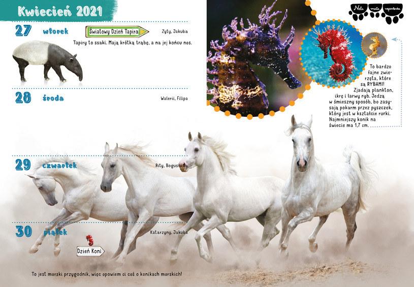 Morski Przygodnik 2020/2021 to kalendarz i organizer w jednym /materiały prasowe