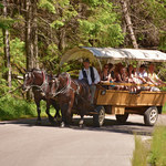 Morskie Oko. Ruszyły badania koni wożących turystów. Nowe zasady