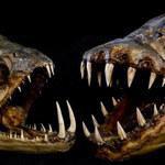 Morskie potwory: Koszmar, który potrwa jeszcze setki lat