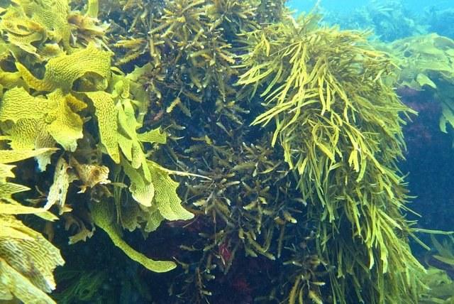 Morskie wodorosty właściwości odżywcze /© Photogenica