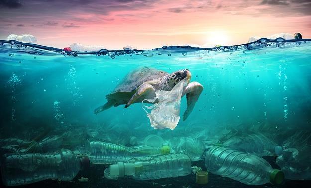 Morza pełne śmieci to hańba XXI wieku /©123RF/PICSEL