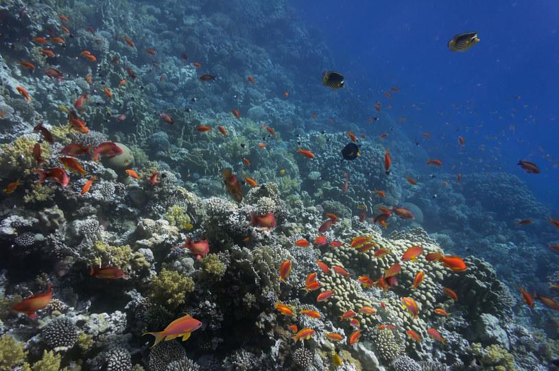 Morze Czerwone odpowiada za emisję dużych ilości gazów cieplarnianych /123RF/PICSEL