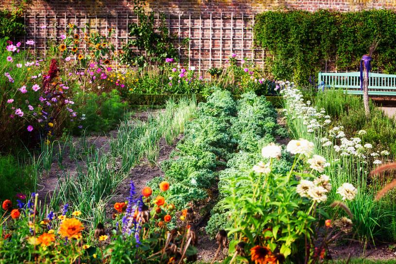 Możemy poprawić jakość gleby w ogrodzie, jej pH, żyzność i strukturę /123RF/PICSEL