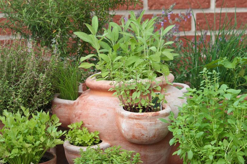 Możesz mieć świeże zioła przez cały rok /123RF/PICSEL