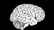 Mózg na siłowni
