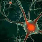 Mózg po wybuchu bomby atomowej regeneruje się szybciej
