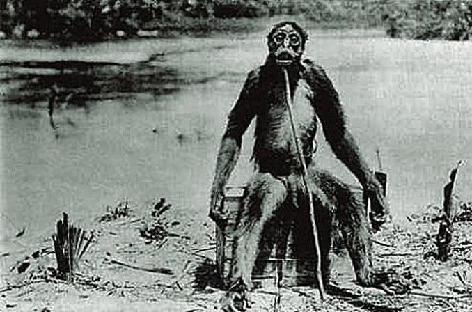 Możliwe, że Maricoxi to w istocie małpa de Loysa (na zdjęciu), odkryta rzekomo w 1920 roku. Problem w tym, że istnienie małpy de Loysa również nie zostało nigdy potwierdzone /Wikipedia