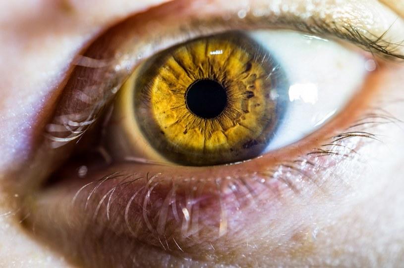 Możliwość zmiany naturalnego koloru tęczówek dają soczewki kontaktowe /materiały promocyjne