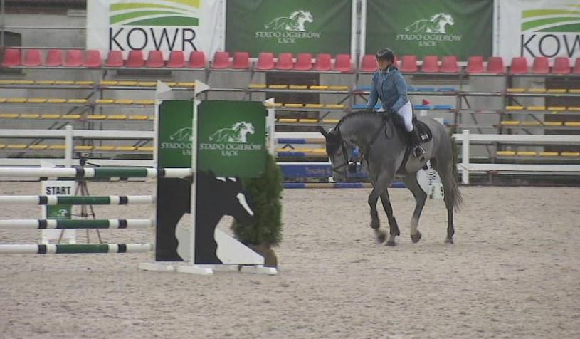 MPMK są jedną z najważniejszych prób hodowlano-selekcyjnych dla koni w Polsce /Polsat News /Polsat News