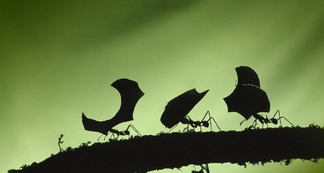 mrówki jak się pozbyć /© Photogenica