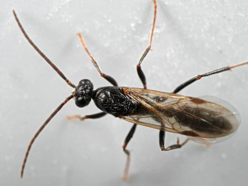 Mrówki zazwyczaj składają jaja w ziemi, ale coraz częściej szukają także miejsca w naszych domach /123RF/PICSEL