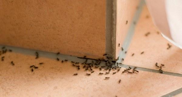 mrówki zwalczanie /© Photogenica