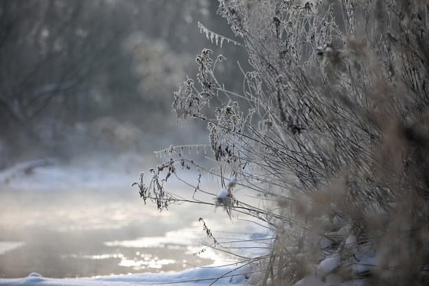 Mroźny poranek nad rzeką Świder w Otwocku, 18 stycznia / Leszek Szymański    /PAP