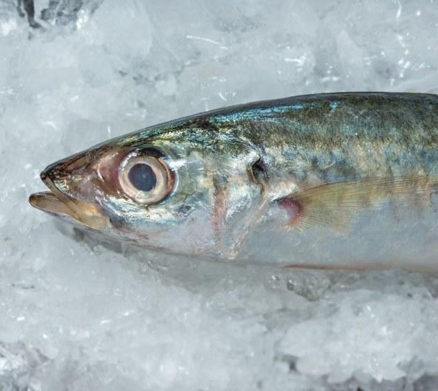 Mrożona ryba /©123RF/PICSEL