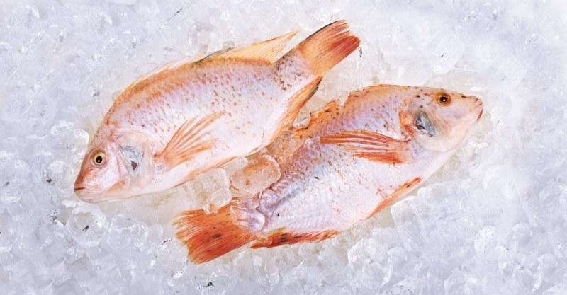 mrozona ryba /© Photogenica