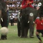 MŚ 2014 - słonie odtrąbiły początek mundialu