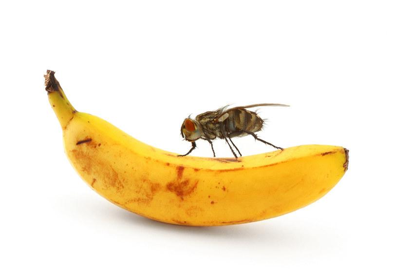 mucha a żywność /© Photogenica