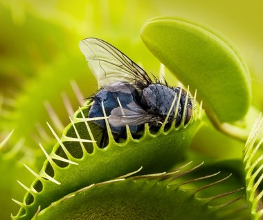 Muchołówka - antidotum na owady