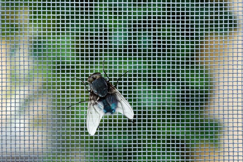 Muchy mogą roznosić wiele groźnych dla zdrowia chorób. /123RF/PICSEL