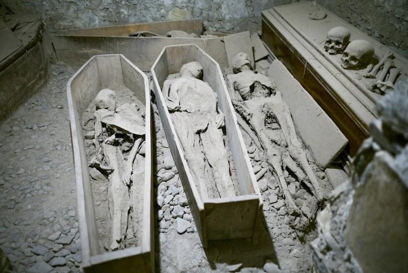 Mumie z St. Michan's Church /materiały prasowe