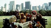 """""""Muppety"""": Kermit i spółka powracają. Najbardziej oczekiwana premiera jesieni?"""