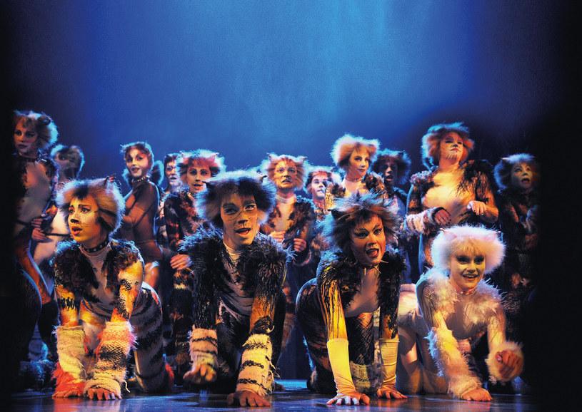 """Musical """"Koty"""" to potężna dawka sztuki w najczystszej postaci, fot. Alessandro Pinna /materiały prasowe"""
