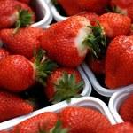 Myślisz, że truskawki na bazarku są tanie? W skupie rolnicy dostają grosze. Wada rynku?