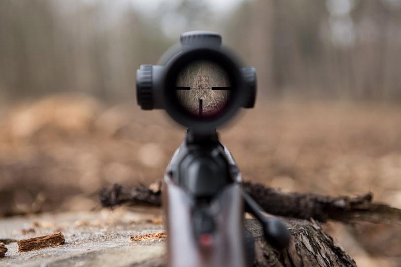 Myśliwi planują zastrzelić do marca 2021 r. 1,5 mln zwierząt /Daniel Dmitriew /Agencja FORUM