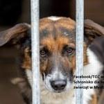 Mysłowice: Schronisko dla zwierząt kończy działalność. Pracownicy apelują o adopcje