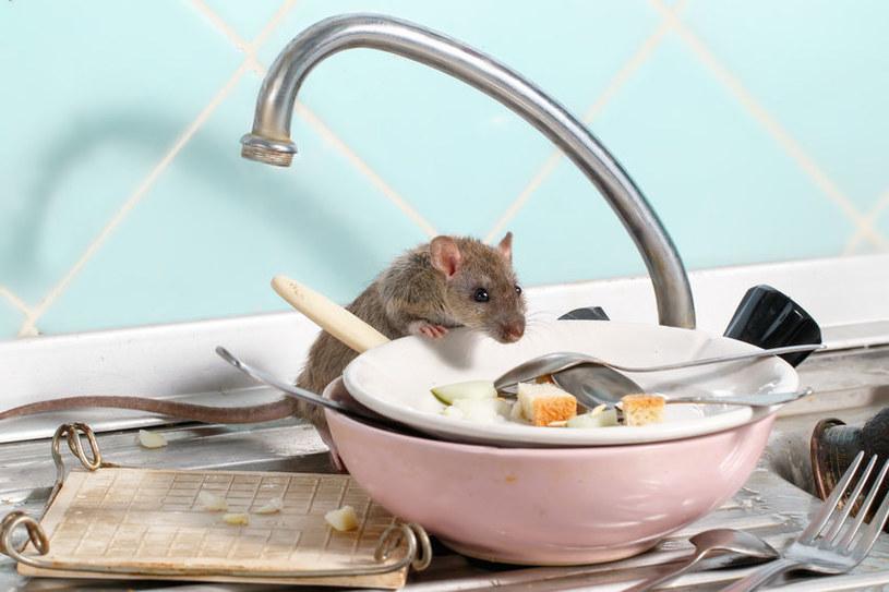 Mysz lgnie do jedzenia /©123RF/PICSEL