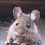 Myszy czują dwutlenek węgla