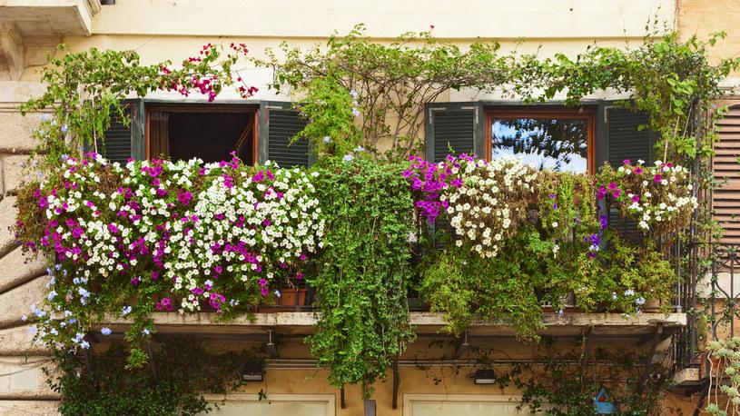 Na balkon południowy  wybieraj doniczki w jasnych kolorach. Niewielki balkon zamień w rajski ogród /123RF/PICSEL