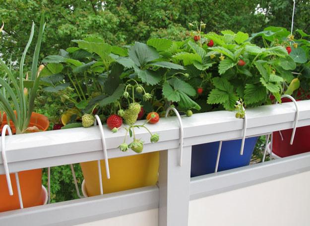 Na balkonie można urządzić całkiem spory ogródek /123RF/PICSEL