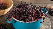 Na co pomagają owoce czarnego bzu?