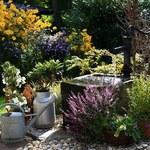 Na co zwrócić uwagę, projektując ogród przy domu?
