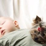 Na co zwrócić uwagę wybierając psa dla rodzin z dziećmi?
