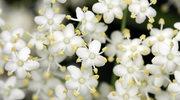Na czym polega alergia krzyżowa?
