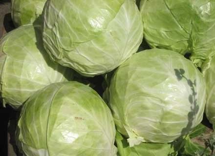 Na diecie kapuścianej można zrzucić kilka kilo w ciągu tygodnia/ fot. Andrzej Szilagyi /MWMedia