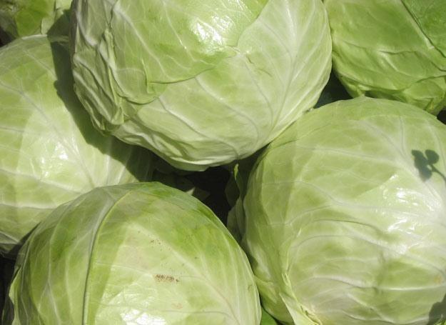 Na diecie kapuścianej można zrzucić kilka kilo w ciągu tygodnia fot. Agata Szilagyi /MWMedia