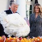 Na dwa dni przed Świętem Dziękczynienia prezydent Trump ułaskawił indyki