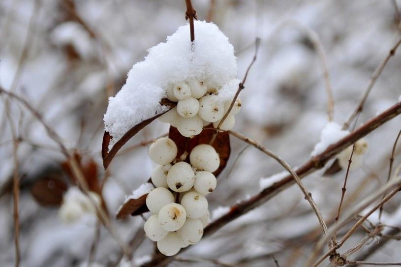 Na horyzoncie śnieg i mróz /Piotr Kamionka /Reporter