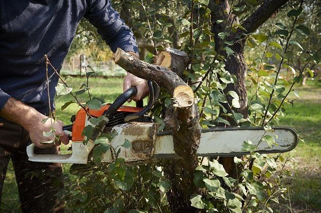 Na jakich zasadach można obecnie wyciąć drzewo na własnej działce? /©123RF/PICSEL