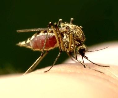 Na jakie owady uważać latem?